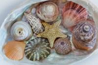 Collection Of Pacific Northwest Seashells Fine-Art Print