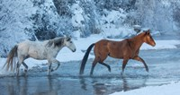 Horses Crossing Shell Creek In Winter, Wyoming Fine-Art Print