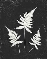 Forest Shadows IV Black Crop Fine-Art Print