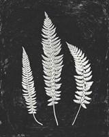 Forest Shadows II Black Crop Fine-Art Print
