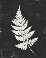 Forest Shadows I Black Crop Fine-Art Print