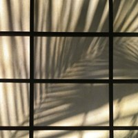 Palm Window Fine-Art Print