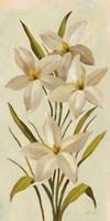 Elegant White Florals II Fine-Art Print