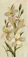 Elegant White Florals I Fine-Art Print