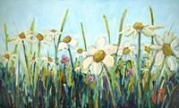 Daisy Do Fine-Art Print