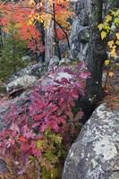 Autumn Color Foliage And Boulders Along Saint Louis River, Minnesota. Fine-Art Print