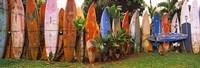 Arranged Surfboards, Maui, Hawaii Fine-Art Print