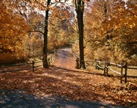1960s AUTUMN TRAIL PARK PATH WISCONSIN Fine-Art Print