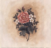 Antique Rose II Fine-Art Print