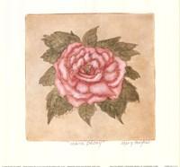Mauve Peony Fine-Art Print