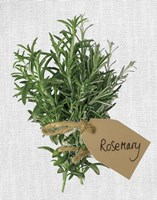 Rosemary Fine-Art Print