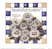 Shasta Daisy Fine-Art Print