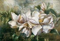 Dawning Magnolias Fine-Art Print