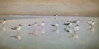 Coastal Reflections Fine-Art Print