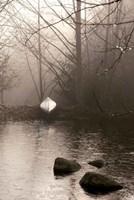 Silvered Morning Pond Fine-Art Print