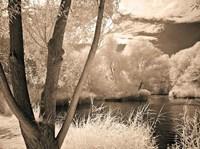 Lakefront View I Fine-Art Print