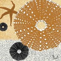 Tidepool Dreams I Fine-Art Print