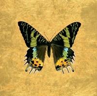 Butterfly on Gold Fine-Art Print