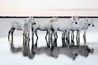 Calm Waters Fine-Art Print