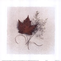 Maple Fine-Art Print