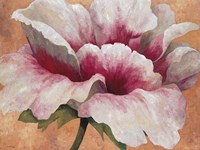 Pink Begonia Fine-Art Print
