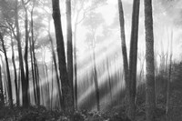 Mystical Forest & Sunbeams Fine-Art Print
