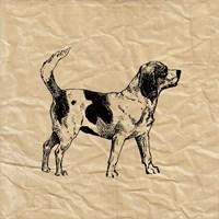 Beagle Fine-Art Print