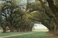Alley Of The Oaks Fine-Art Print