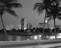 Night View Skyline With Palm Trees Miami Florida Fine-Art Print