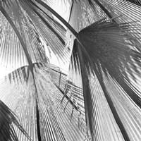 Leaf Abstract III Fine-Art Print
