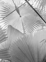 Leaf Abstract II Fine-Art Print