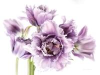 Purple Fringed Tulips I Fine-Art Print