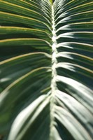 Palm Detail II Fine-Art Print