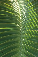 Palm Detail I Fine-Art Print