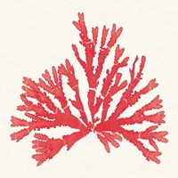 Pacific Sea Mosses IV Red Fine-Art Print