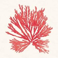 Pacific Sea Mosses II Red Fine-Art Print