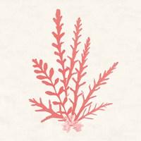Pacific Sea Mosses III Coral Fine-Art Print