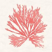Pacific Sea Mosses II Coral Fine-Art Print