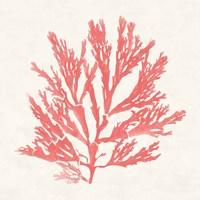 Pacific Sea Mosses I Coral Fine-Art Print