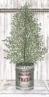 Galvanized Pot Cedar Fine-Art Print
