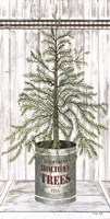 Galvanized Pot Pine Fine-Art Print