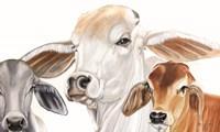 Ranch Life Fine-Art Print