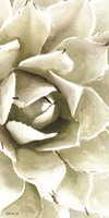 Agave Panel 1 Fine-Art Print