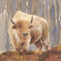 White Buffalo Fine-Art Print