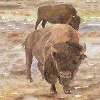 Great Buffalo Fine-Art Print