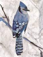 Blue Jay 1 Fine-Art Print