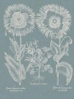 Besler Poppies I Fine-Art Print