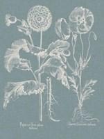 Besler Poppies II Fine-Art Print