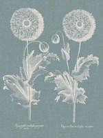 Besler Poppies III Fine-Art Print