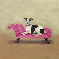 Italian Greyhound on Pink Fine-Art Print